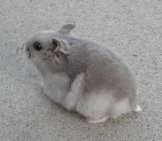 Sapphire Winter White