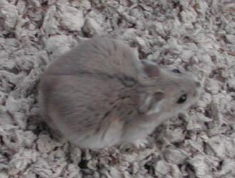 pregnant winter white